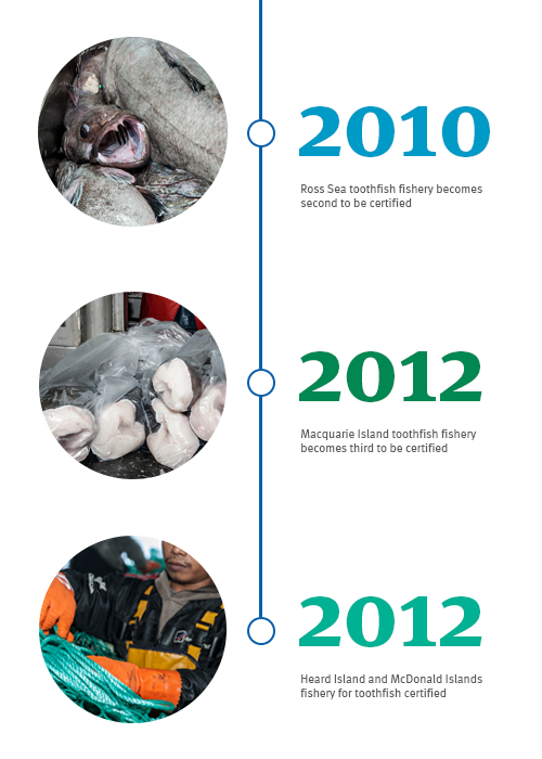 Chilean Sea Bass: How Patagonian Toothfish was saved | MSC